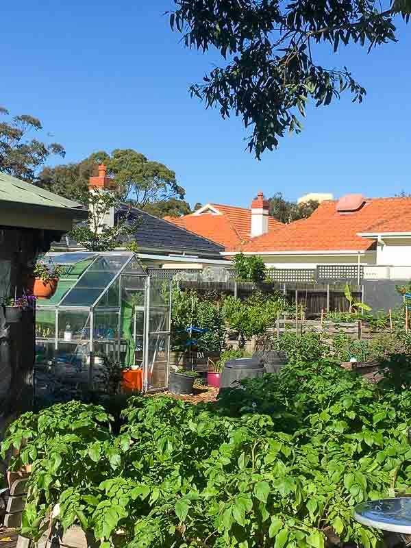 Sydney Edible Garden Trail - Mackie Lane Community Garden