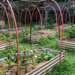 Sydney Edible Garden Trail - Newport Community Garden