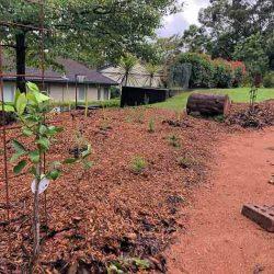 web Nth Wahroonga Street Garden Gauri Fruit Trees