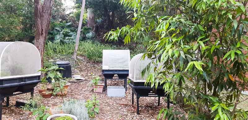 Sydney Edible Garden Trail - Stringybark Community Garden